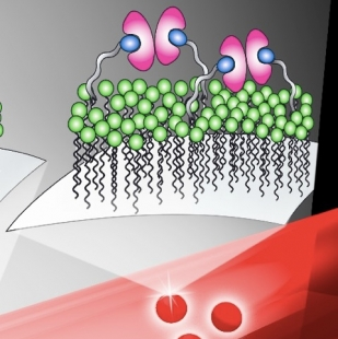 Nanoparticles in a laser beam
